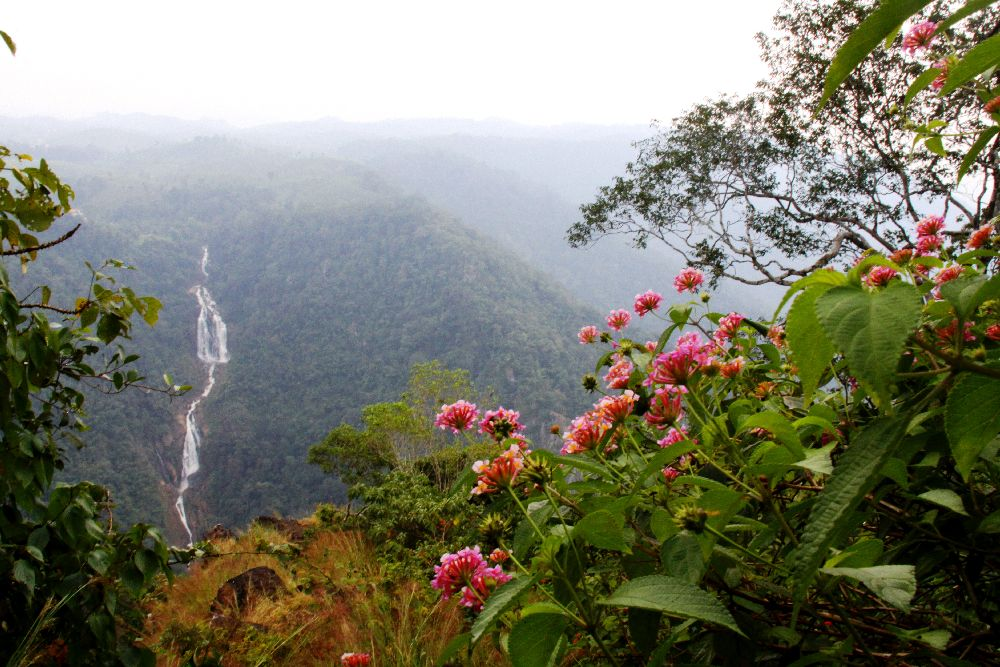 Kerala Wayanad hill country side view flowers waterfall